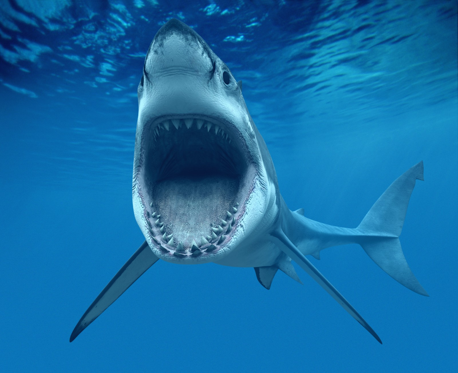 It's SHARK WEEK! Facts you should know.....