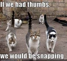 Here's a scary thought... What if cats had thumbs?