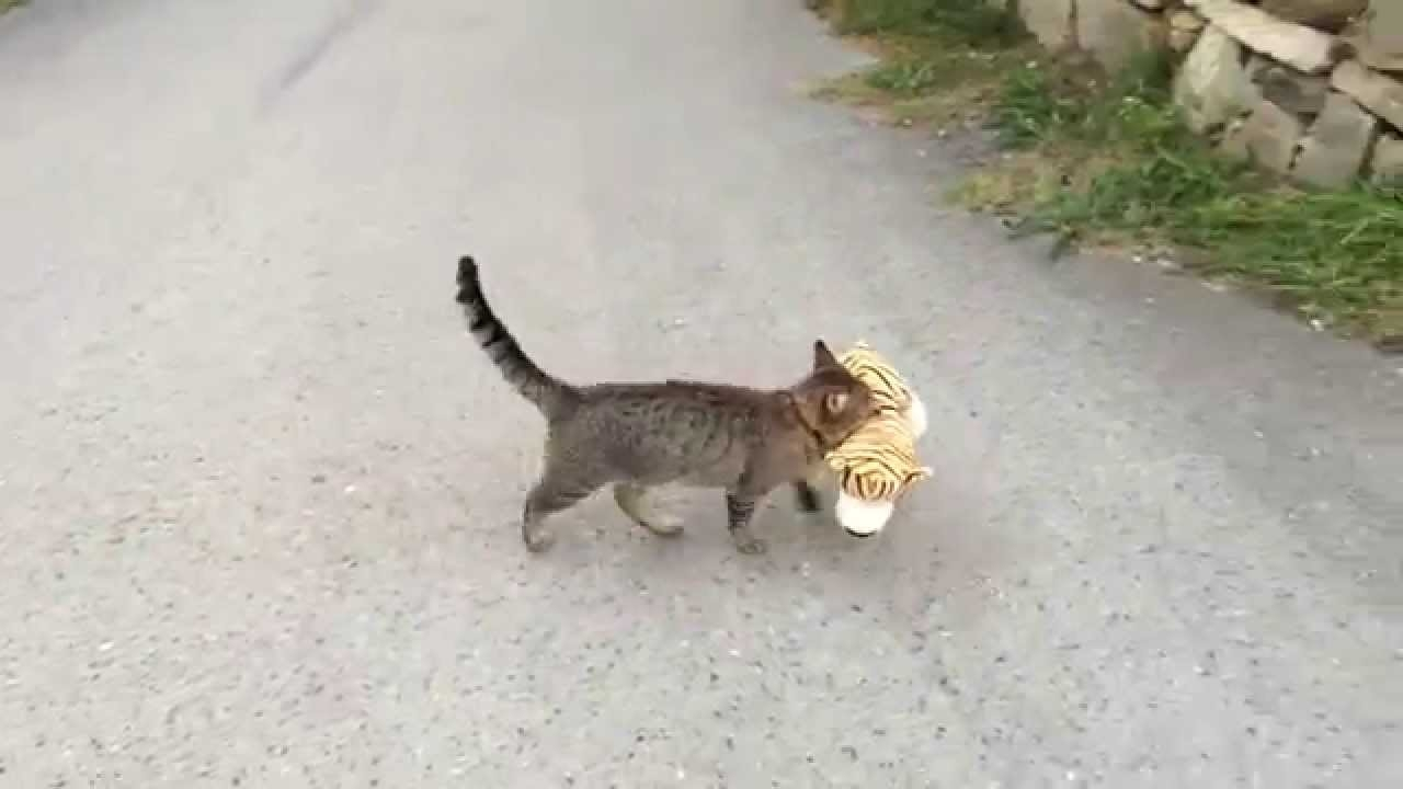 Kitty borrows a stuffed tiger from neighbours house.