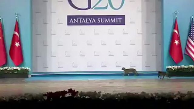 New security cat check at G20 in Turkey.