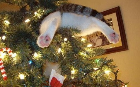 Cats and Christmas trees....