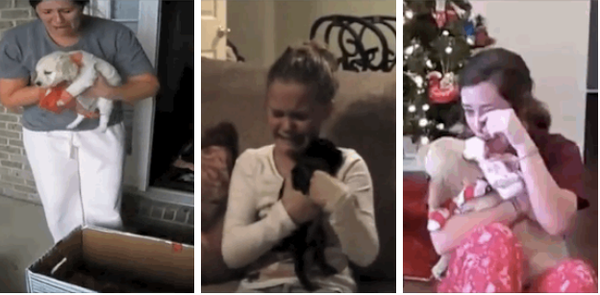 People getting puppies for Christmas? Probably the best thing you'll see today (VIDEO).