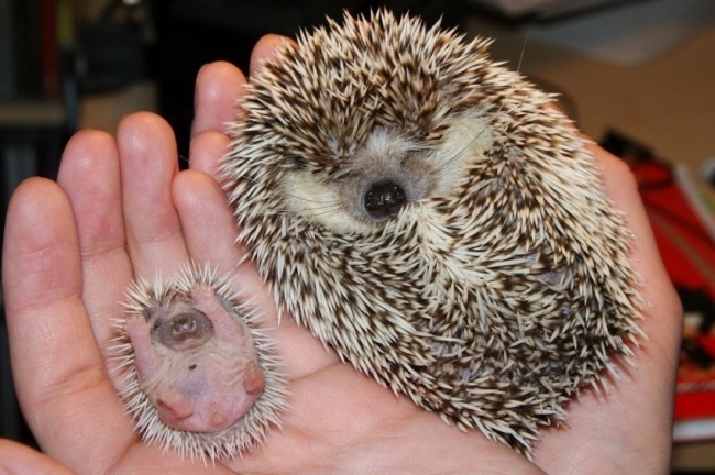 14 baby animals. Too damn cute.