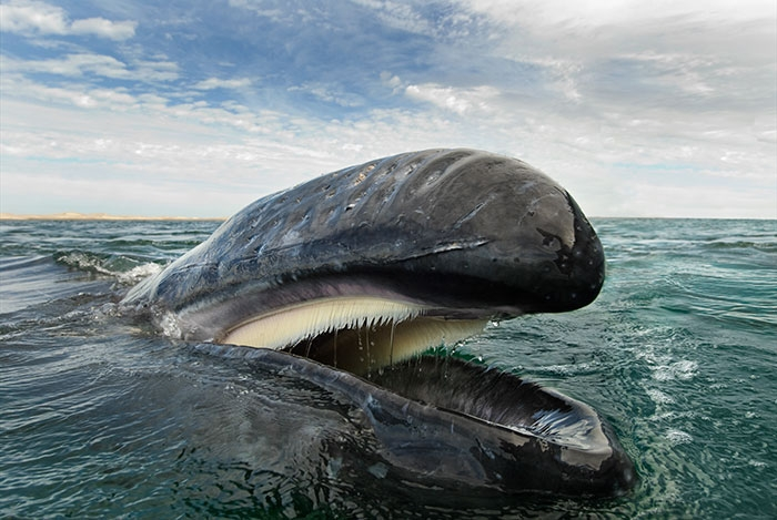 Excellent Whale and Dolphin pictures