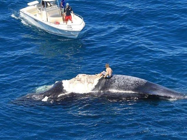 Idiot Surfs Dead Whale
