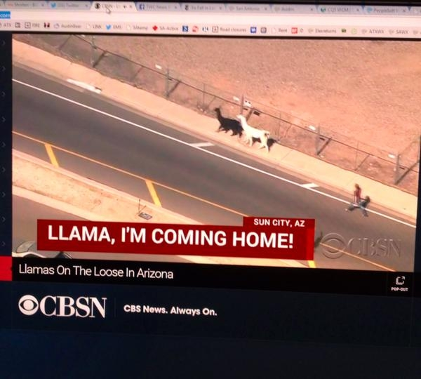 Llama I'm Coming Home