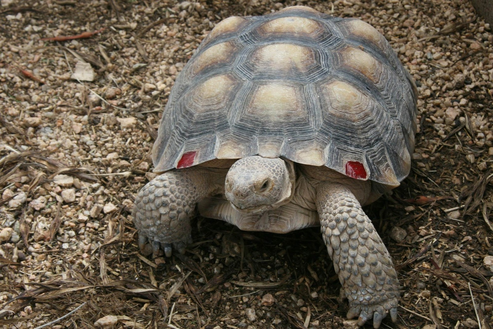 5@5: Stop Putting Gopher Tortoises in the Water!