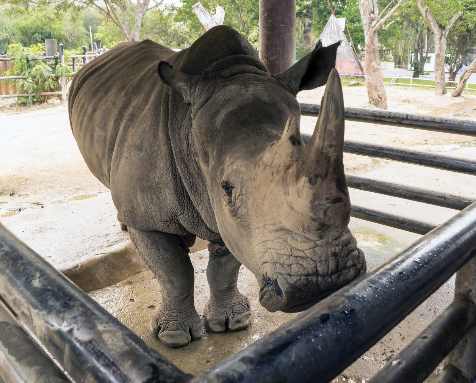 5@5: For Just $350k You Can Kill an Endangered Rhino