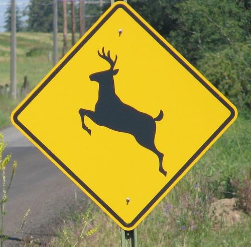 Deer-Car accidents