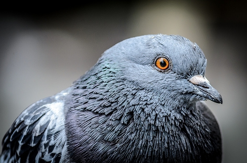 Man With A Bucket On His Head Breaks Into Store; Steals Pigeons