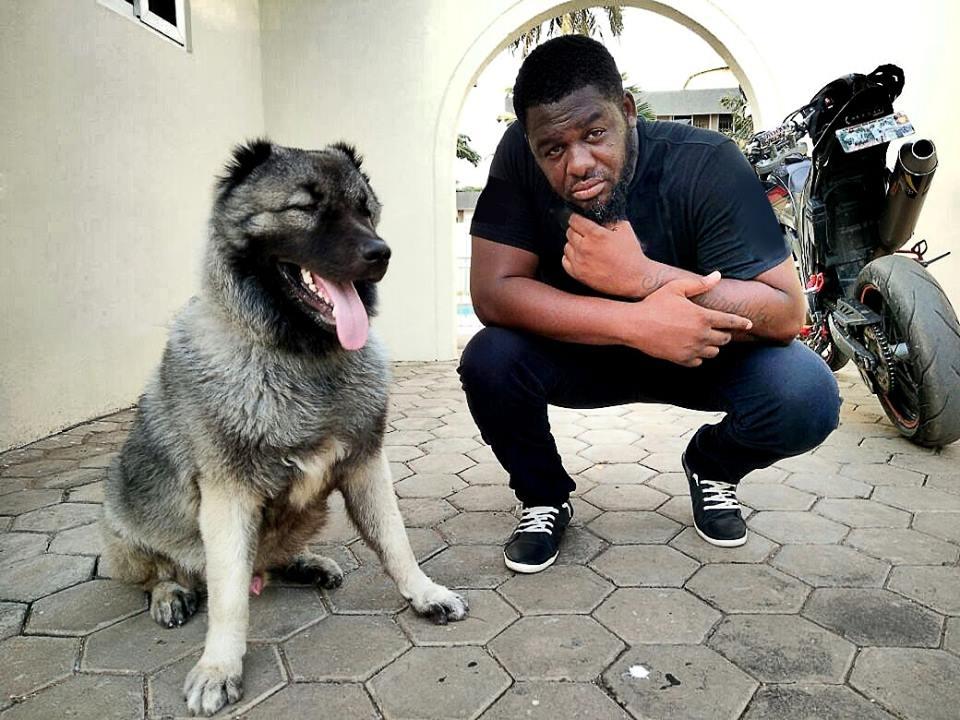 Bulldog reacts to Shatta Wale Calling him a DOG