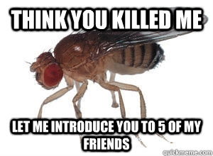 The Best Ways To Get Rid of Fruit Flies