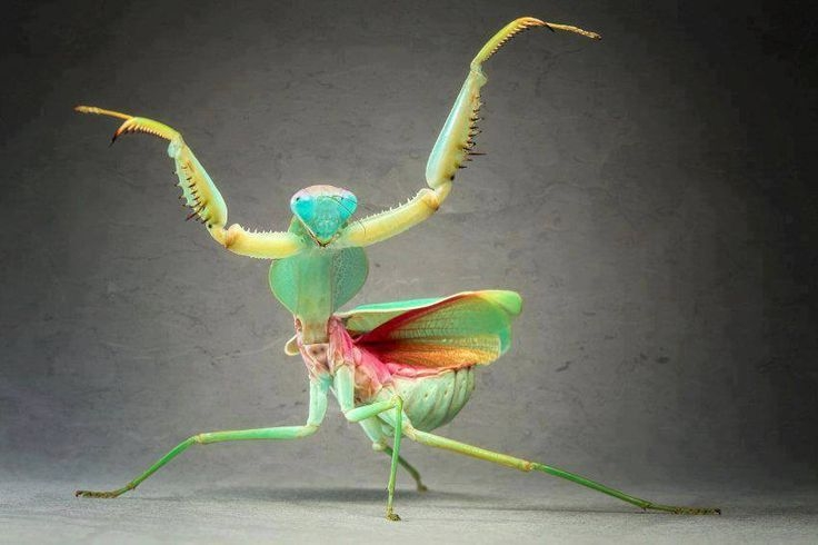 5 Majestic Insects