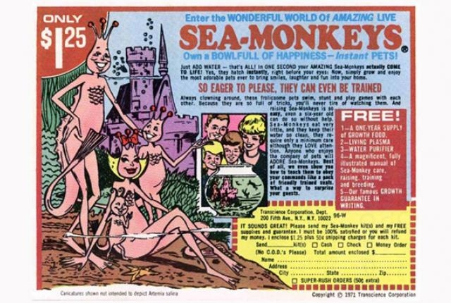 What The Heck Are Sea Monkeys?!